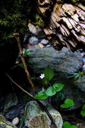 BC little flower (1 of 1)