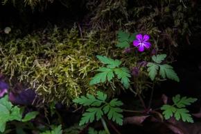 BC little flower purple (1 of 1)