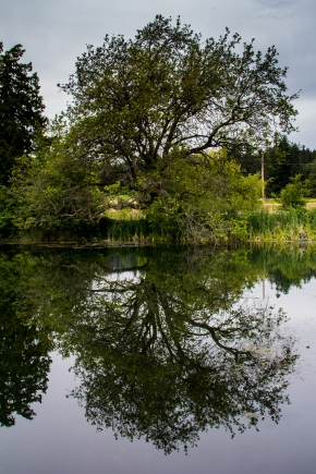 BC meadow tree (1 of 1)