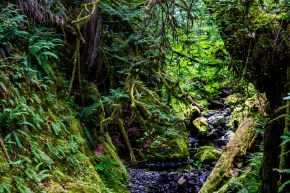 BC gold stream park 2 (1 of 1)