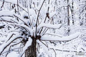 swirly tree (1 of 1)
