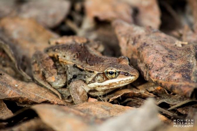 Frog Camo